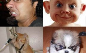 Funny people and animal pictures