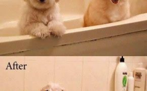Funny Picture dogs in the tub